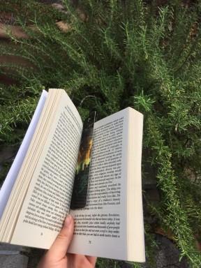 book pic